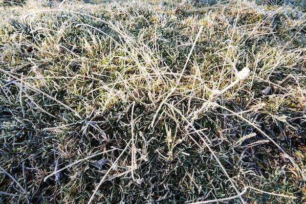 Jesienne liście na zamarzniętej zielonej trawie z bliska