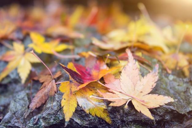 Jesienne liście. piękne żółte, pomarańczowe i czerwone liście na kamieniach