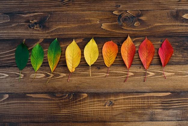 Jesienne liście przejście od zieleni do czerwieni na drewnianym tle
