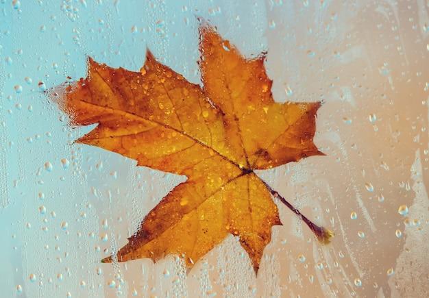 Jesienne liście. selektywna ostrość. flora i fauna.