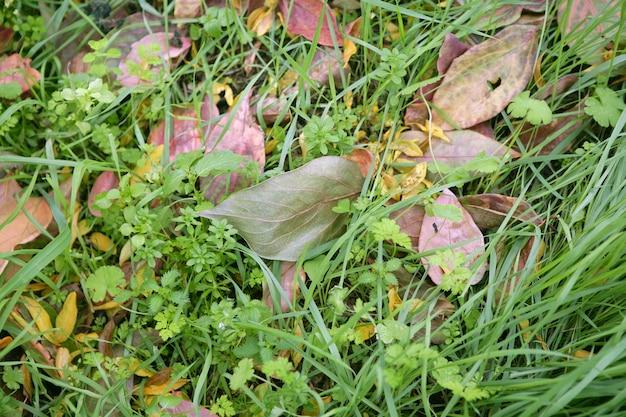 Jesienne liście spadają w zielonej trawie