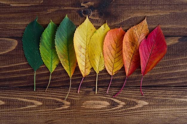 Jesienne liście ułożone w pasie przechodzą z zielonego na czerwony na drewnianym tle