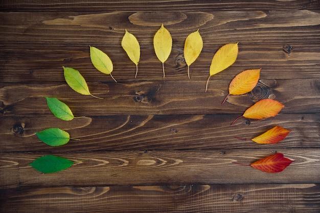 Jesienne liście ułożone w półkole przechodzą z zielonego na czerwony na drewnianym tle. koncepcja zmiany sezonu.