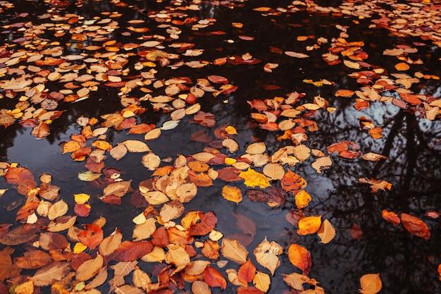 Jesienne liście w kałuży