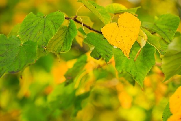 Jesienne liście w kolorze żółtym zdobią piękną przyrodę tło bokeh piękna przyroda