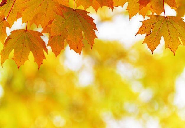 Jesienne liście w parku. kolorowa jesień