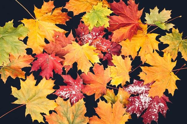Jesienne liście w różnych kolorach na ciemnej powierzchni