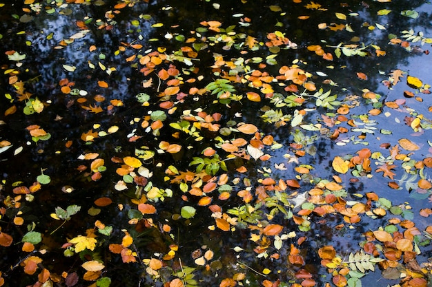 Jesienne liście w wodzie, odbicie wody i kolorowy liść w parku w berlinie, niemcy
