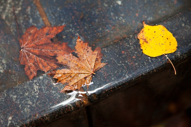 Jesienne liście w wodzie