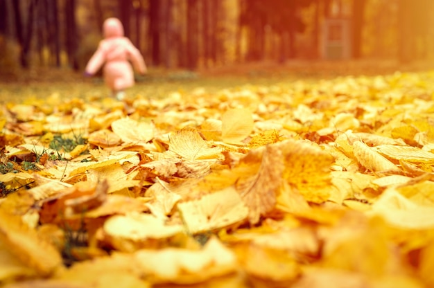 Jesienne liście wiązu na ziemi z bliska i na tle rozmazanego biegania dziewczyna dziecko w parku jesienią. migotać