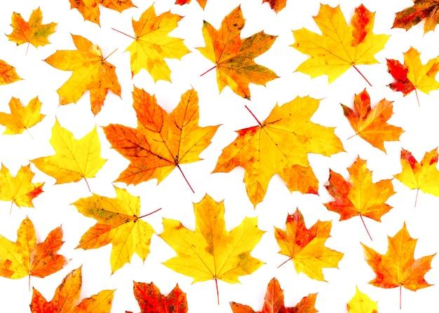 Jesienne liście wzór na białym tle