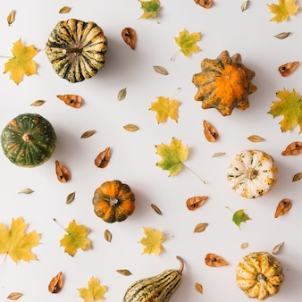 Jesienne liście wzór z dyni na białej ścianie. leżał na płasko.