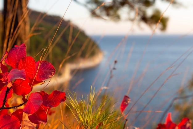 Jesienne liście z bliska przez morze i las