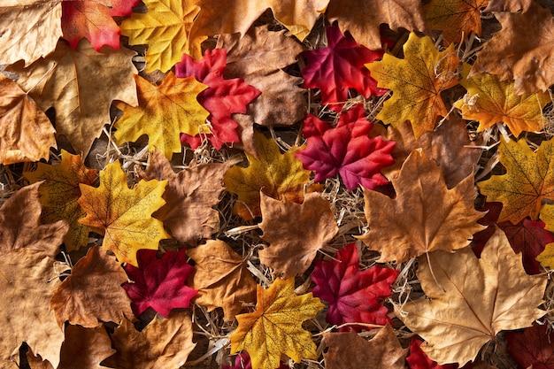 Jesienne liście z różnymi kolorami tła