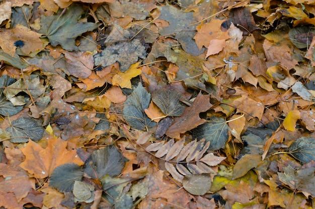 Jesienne liście zgniłe tło