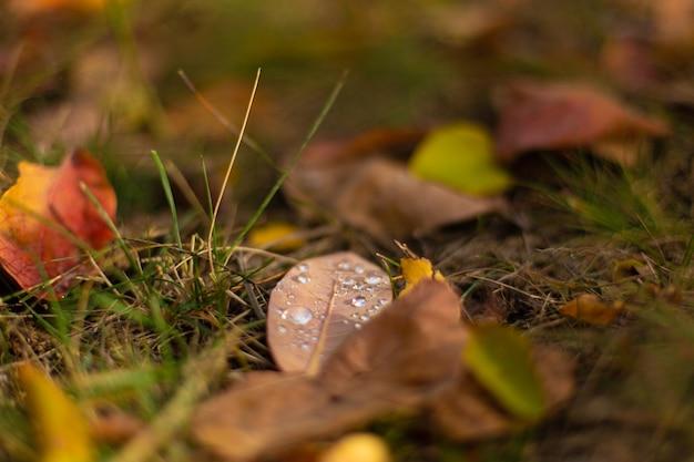 Jesienne odcienie kolorów. opadłe liście w różnych kolorach na trawie w parku.