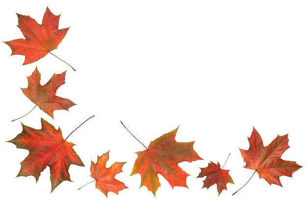 Jesienne pomarańczowe liście spadające na białym tle