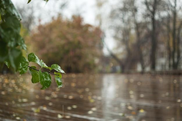 Jesienne tło. drzewa o pożółkłych liściach