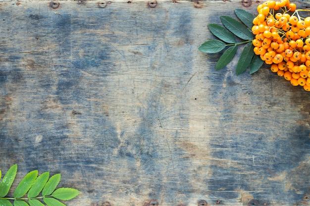 Jesienne tło. pęczek jagód jarzębiny na starym drewnianym tle. widok z góry. skopiuj miejsce.