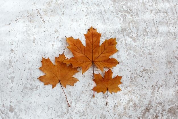 Jesienne tło z trzema klonowymi pomarańczowymi liśćmi jako rodzina z jednym dorosłym i dwójką dzieci na jasnoszarym tle
