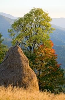 Jesienne wzgórze górskie z kolorowym drzewem i stogiem siana (karpaty, ukraina)