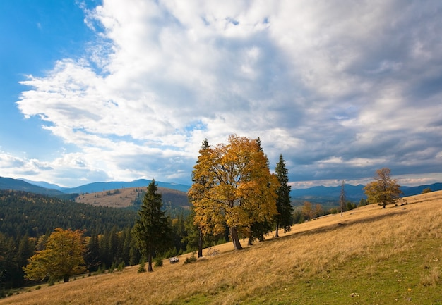Jesienne wzgórze z kolorowymi drzewami (karpaty, ukraina)