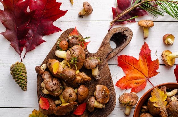 Jesienne zbiory grzybów. jadalne tłuste pieczarki i kolorowi spadać liście na drewnianej desce na białym tle.