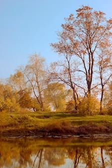 Jesienne żółte drzewa na brzegu rzeki z odbiciami na wodzie. spadek tła.