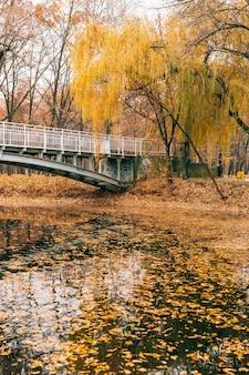 Jesienne żółte liście jesienią
