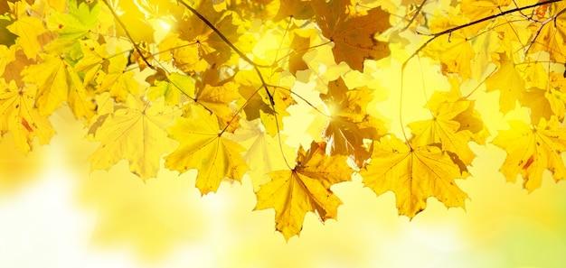 Jesienne żółte liście transparent tło bokeh z promieniami słońca