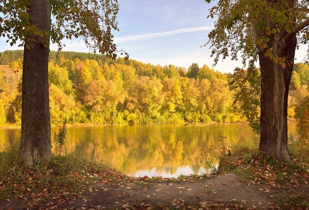 Jesienny brzeg rzeki inya pnie drzew ze złotymi liśćmi na wysokim zboczu
