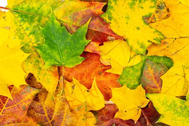 Jesienny bukiet suchych liści klonu tekstury tła. rama.