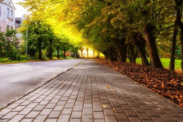 Jesienny chodnik z drzewami i opadłymi liśćmi w mieście