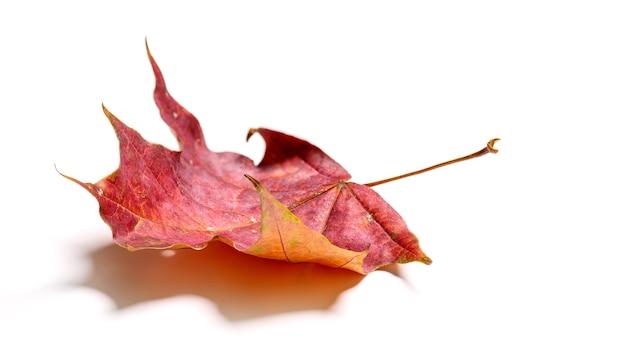 Jesienny czerwony liść klonu na białym tle