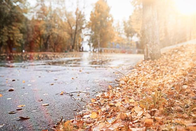 Jesienny deszcz w parku w ciągu dnia