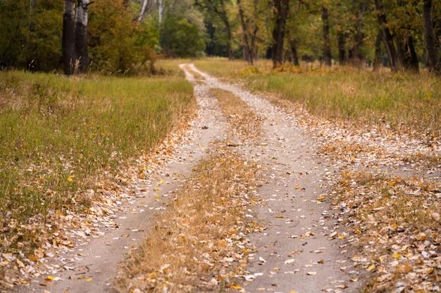 Jesienny dziki las, wydeptana ścieżka, opadłe żółte liście i pożółkła trawa