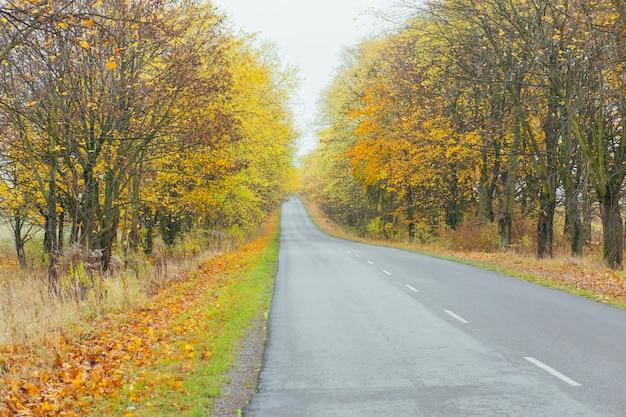 Jesienny krajobraz autostrady, między drzewami z żółtymi liśćmi