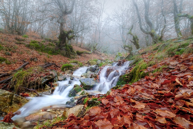 Jesienny krajobraz bukowy ze strumieniem schodzącym z góry i długim czasem naświetlania.