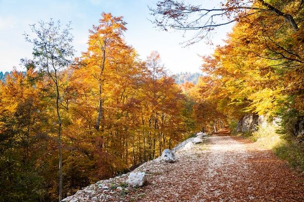 Jesienny krajobraz górski