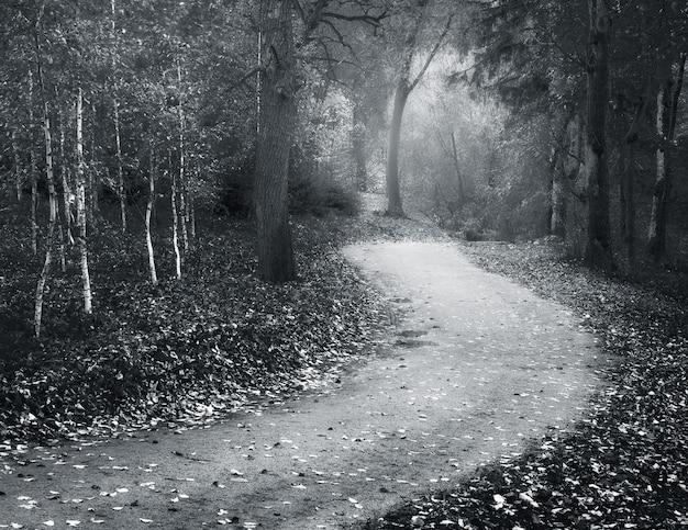 Jesienny krajobraz. kompozycja natury.