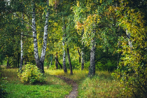 Jesienny krajobraz lasu.