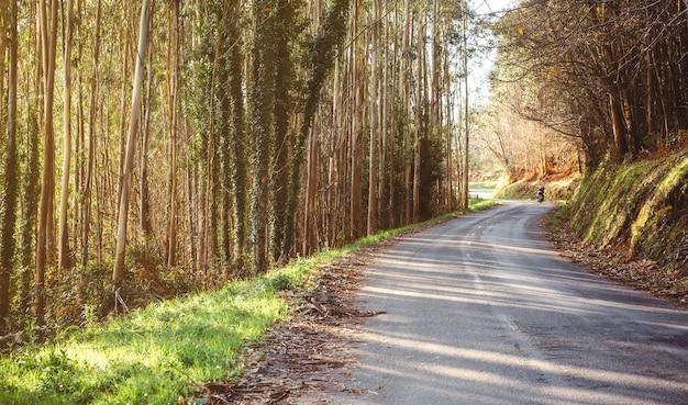 Jesienny krajobraz leśnej drogi z parą jadącą na motocyklu w tle
