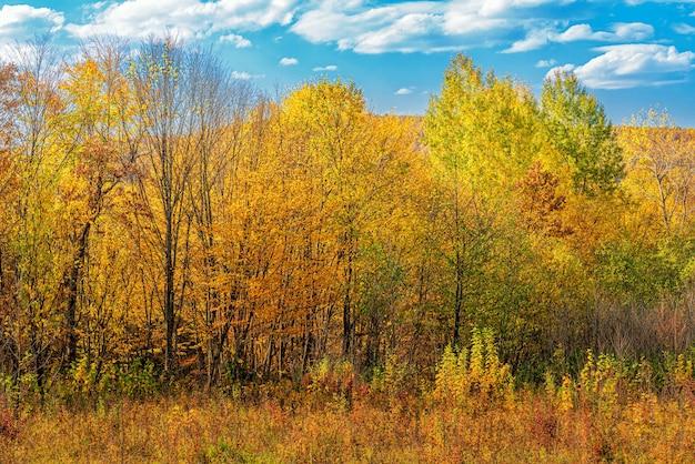 Jesienny krajobraz leśnej polany