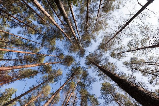 Jesienny krajobraz leśny