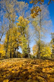 Jesienny krajobraz, liście na ziemi wczesną jesienią, piękna przyroda w opadających liściach w przyrodzie, las liściasty z mieszanymi gatunkami drzew