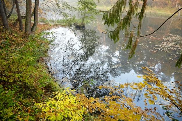 Jesienny krajobraz. mgłowy las i rzeka. poranna natura we mgle. gałąź drzewa. żółte liście
