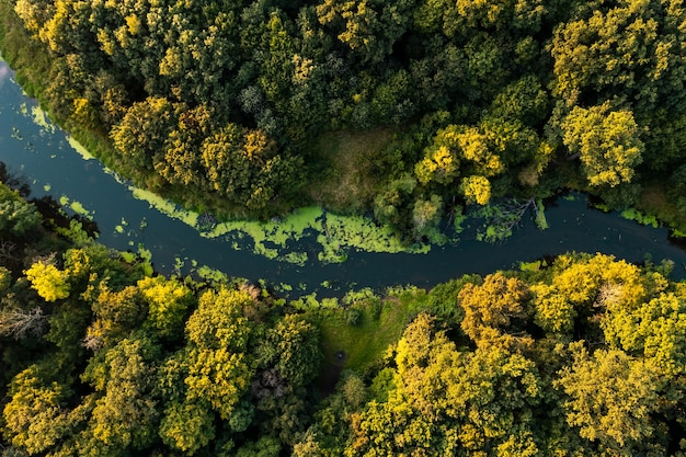 Jesienny krajobraz. niebieska rzeka płynąca przez żółty las. widok z góry
