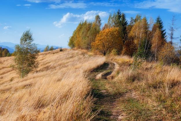 Jesienny krajobraz parku