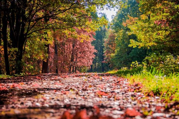 Jesienny krajobraz parku.