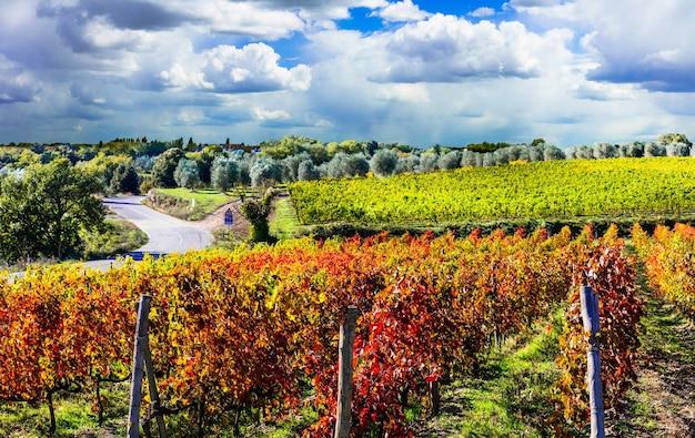 Jesienny krajobraz - piękne winnice toskanii we włoszech